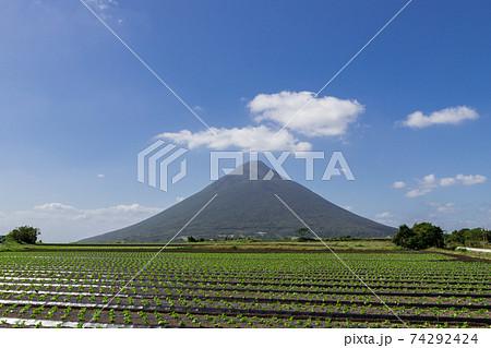 さつま芋畑の彼方にそびえる開聞岳(薩摩富士) 74292424