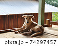 DOG 全身 74297457