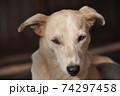 雑種 DOG 正面アップ 74297458
