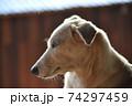 雑種 DOG 横顔 74297459