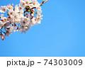 青空と左上に桜(コピースペースあり) 74303009