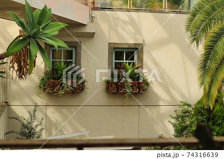 植物が綺麗に飾ってある向かい側の窓 74316639