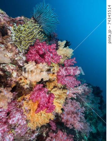 色とりどりのソフトコーラルとウミシダ (メルギー諸島、ミャンマー) 74345514