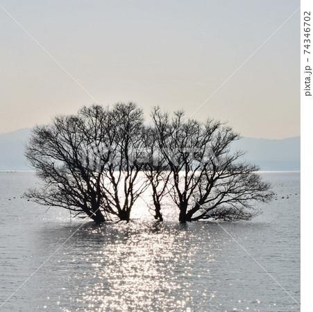 【滋賀】水中木とキラキラ輝く水面 74346702