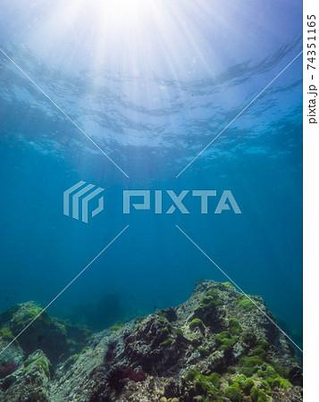 海中の海藻の生えた岩に陽光が射す (メルギー諸島、ミャンマー) 74351165