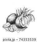 Coconut and coconut shavings. Hand drawn sketches vector illustration on white background in vintage style. 74353539