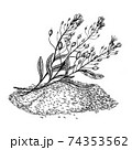 Camelina sativa seeds with flowers and leaves. Hand drawn vector illustration on white background. Engraving drawing style. 74353562