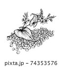 Buckwheat plant and seeds. Hand drawn vector illustration of buckwheat plant with flowers on white background. 74353576