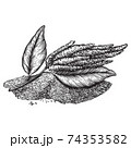 Drawings of amaranth flowering plants and seeds. Organic superfood product for healthy nutrition hand drawn on white background. Engraving drawing style vector illustration 74353582