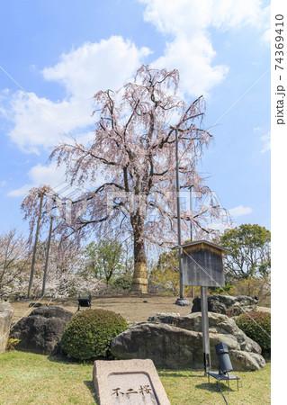 京都の春 東寺の枝垂桜 74369410