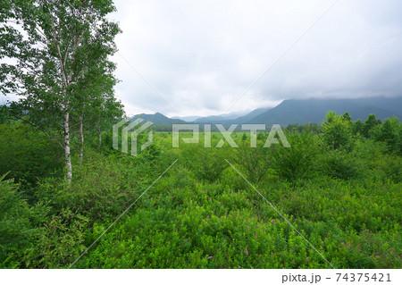 日光国立公園内の戦場ヶ原の湿地帯 74375421