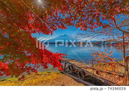 河口湖 紅葉 74396059