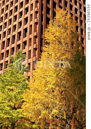 丸の内のオフィス街に輝く銀杏並木 74396534