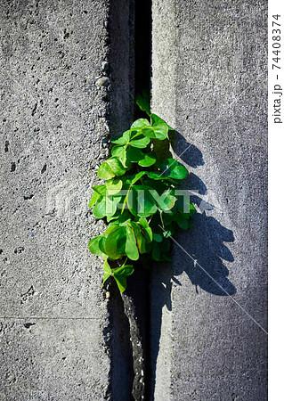 家のコンクリートに生える緑色の植物 74408374
