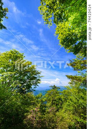 春の彩り、三頭山頂上から(新緑と青空) 74410414