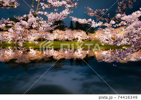 弘前城公園西濠のライトアップされた美しい夜桜 74416349