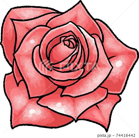 【手描きベクターイラスト素材】赤い薔薇のイラスト 74416442
