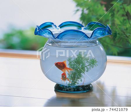 縁側に置いた金魚鉢 74421079