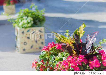 沖縄県・壺屋やちむん通りの鉢植え 74421272