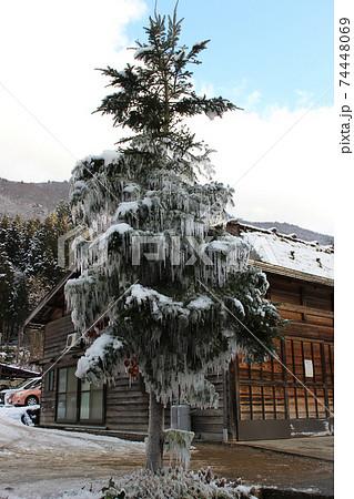 クリスマスツリーみたいな樹氷 岐阜の白川郷 74448069