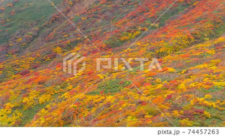 栗駒山 神の絨毯 全山紅葉美 日本一の紅葉の山 日本屈指の絶景 74457263