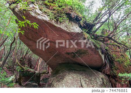 奇岩辻の岩屋。国立公園屋久島白谷雲水峡 74476881