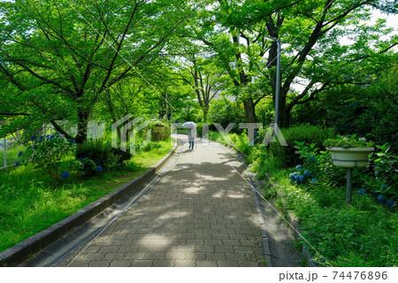木漏れ日の遊歩道と日傘を差して杖を突いて歩く人 74476896