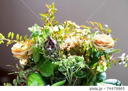 リューカデンドロン・プルモサスの蕾、花束 74479965