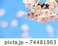 右上に桜と青空(コピースペースあり) 74481963