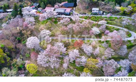 世界遺産 奈良県の吉野山の千本桜(下千本の通り)をドローンで空から撮影 74487075