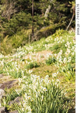 湘南三浦半島の景勝地神奈川県横須賀市観音崎公園の冬 74491176