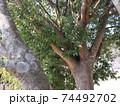 西神中央公園の冬景色葉っぱ少ない 74492702