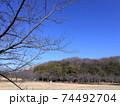 西神中央公園の冬景色葉っぱ少ない 74492704