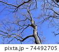 西神中央公園の冬景色葉っぱ少ない 74492705