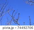 西神中央公園の冬景色葉っぱ少ない 74492706