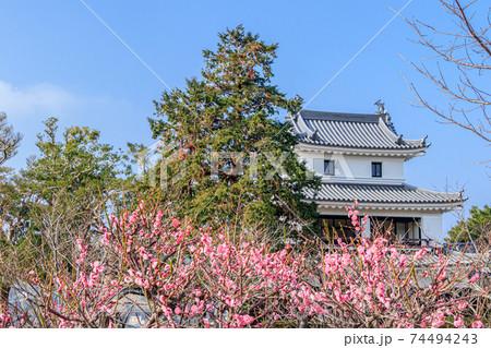 平戸城(櫓)と梅の花 長崎県平戸市 74494243