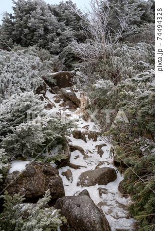 豪雪の年の八ヶ岳天狗岳直下黒百合ヒュッテ前の登山道。霧氷樹氷針葉樹のアイスモンスタースノーモンスター 74494328