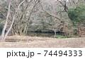 池を取り囲む踊る落葉樹 74494333