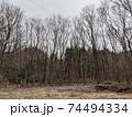 冬の空と広がる大地に並ぶ落葉樹 74494334