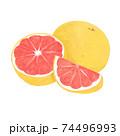 色鉛筆風のグレープフルーツイラスト 74496993