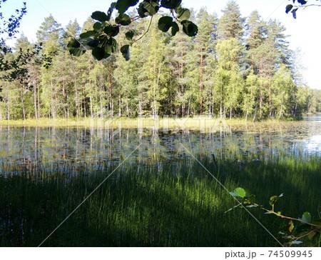 フィンランド・ヘルシンンキ郊外のヌークシオ国立公園の湖 74509945