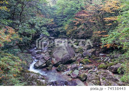 紅葉に映える屋久島白谷雲水峡の渓谷 74538443