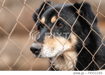 Homeless dog in a shelter for dogs 74551193