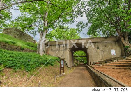 初夏の上田城跡のケヤキ並木遊歩道の風景 74554703