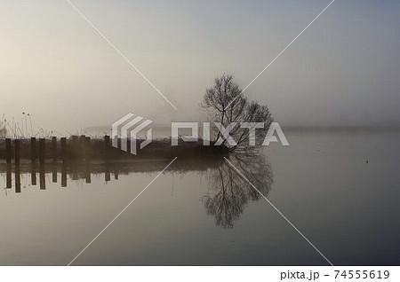 冬の福島潟 朝靄の中水面に映る木 74555619
