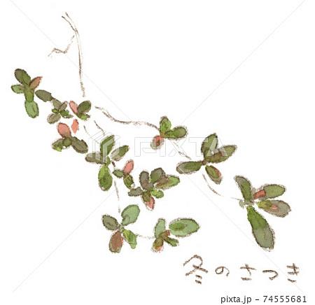 冬の草木:紅葉して春を待つサツキの葉(水彩イラスト) 74555681