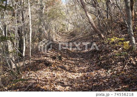 落ち葉で敷き詰められたハイキング道 74556218