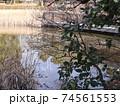 西神中央公園  神戸市 西区 公園 冬 74561553