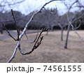 西神中央公園  神戸市 西区 公園 冬 74561555