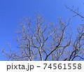 西神中央公園  神戸市 西区 公園 冬 74561558